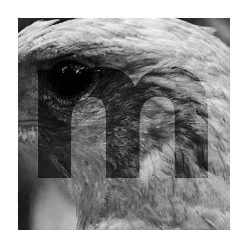 moradelataya-photography-image-picture-animal-eagle-thumbnail